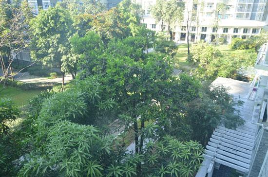 Balcony view of the inner garden